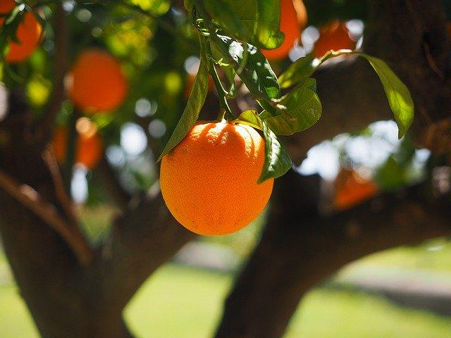 Du CBD sans chanvre à partir d'écorce d'orange au Japon