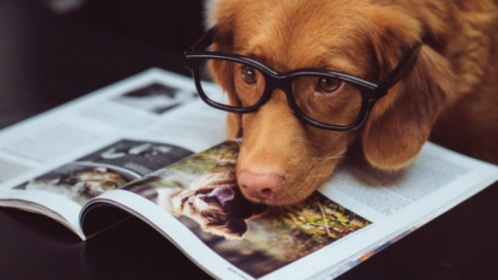 CBD pour chiens: les vétérinaires le recommandent-ils pour vos animaux de compagnie?