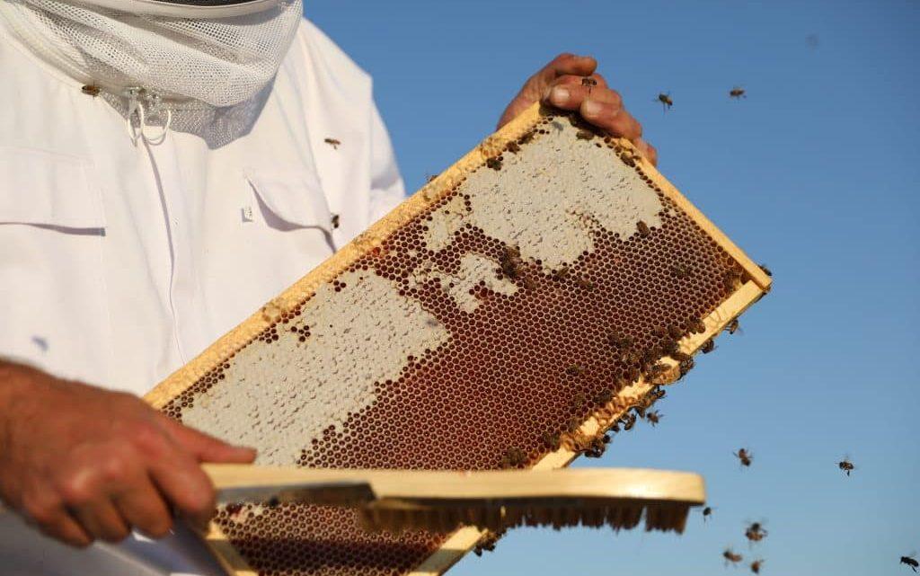 Miel de CBD fait d'abeille |  AspenTimes.com