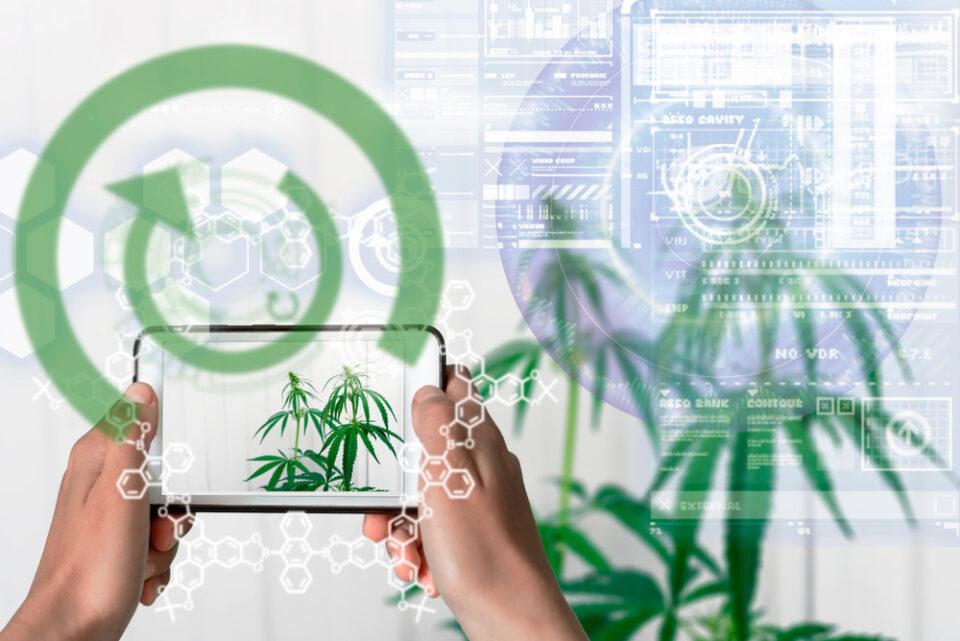 Comment la technologie remodèle l'industrie du CBD