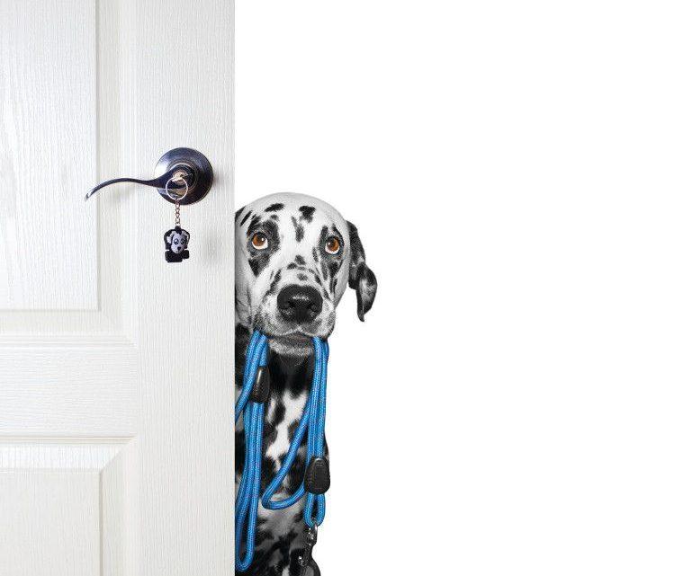 Des essais récemment achevés testent la tolérance de la formulation de CBD et de glucosamine chez le chien