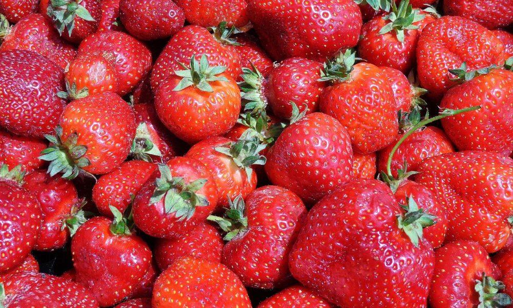 Le dumping d'huile de CBD sur les fraises prolonge leur durée de conservation et arrête la croissance des moisissures, selon une nouvelle étude