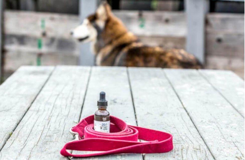 Les avantages potentiels des produits à base d'huile de CBD pour les chiens – Film Daily