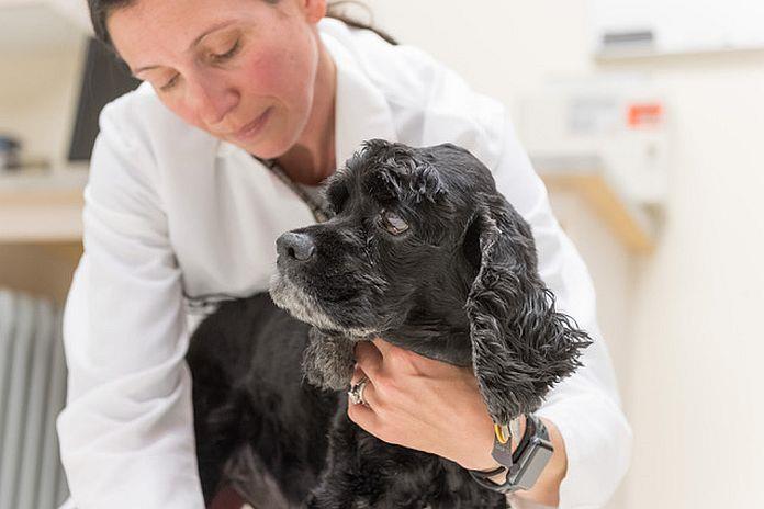 CBD pour chiens?  Une nouvelle recherche soutient l'utilisation de l'huile de chanvre canin pour l'épilepsie et l'arthrite