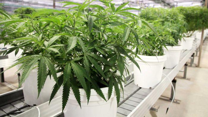 2021 nous donne du cannabis médical en vente libre – Hack