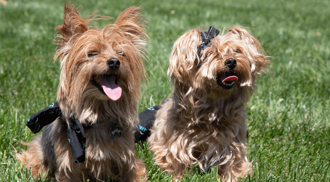 Ce qu'il faut savoir avant de donner du CBD à votre animal de compagnie