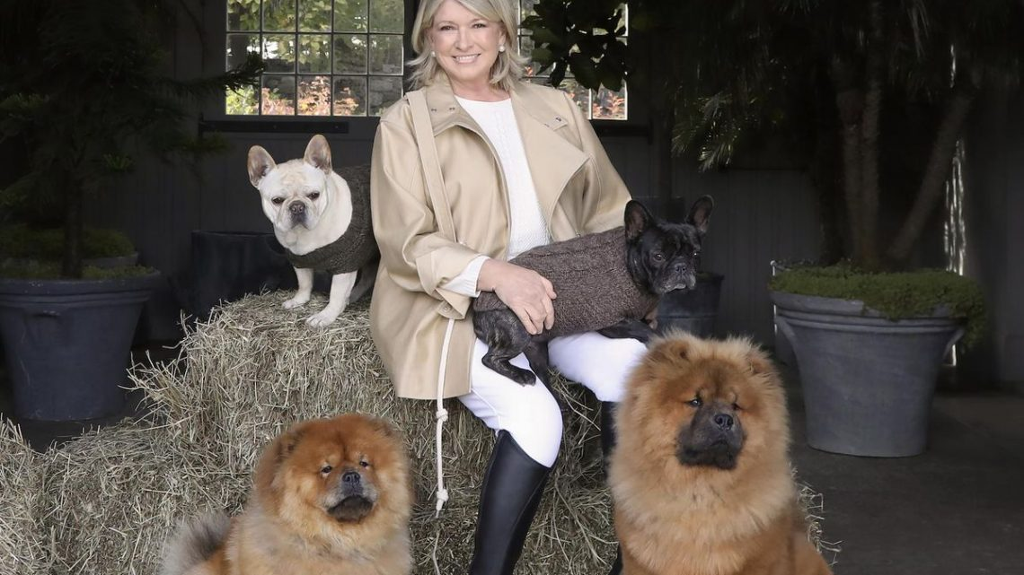 Martha Stewart lance une nouvelle gamme de friandises CBD pour chiens