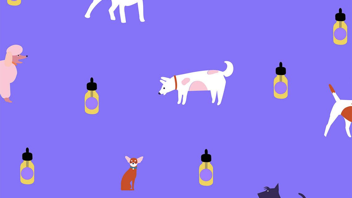 Meilleur CBD pour chiens – Guide de l'acheteur (Mise à jour: 2020)