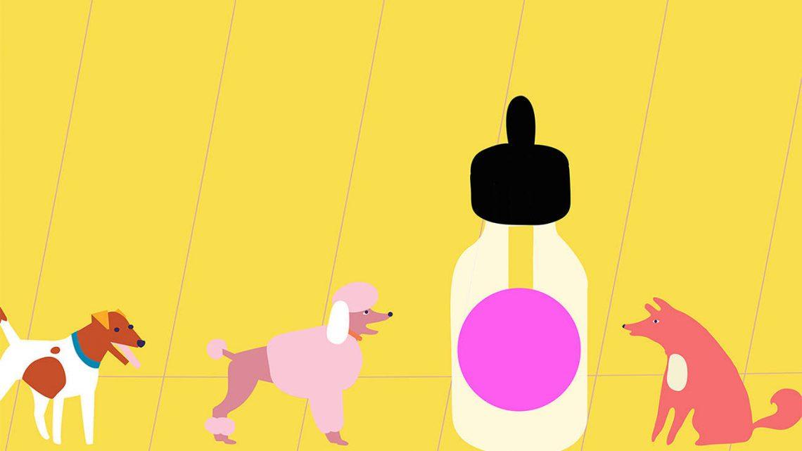Meilleure huile de CBD pour chiens – Meilleures marques pour l'anxiété (2020)
