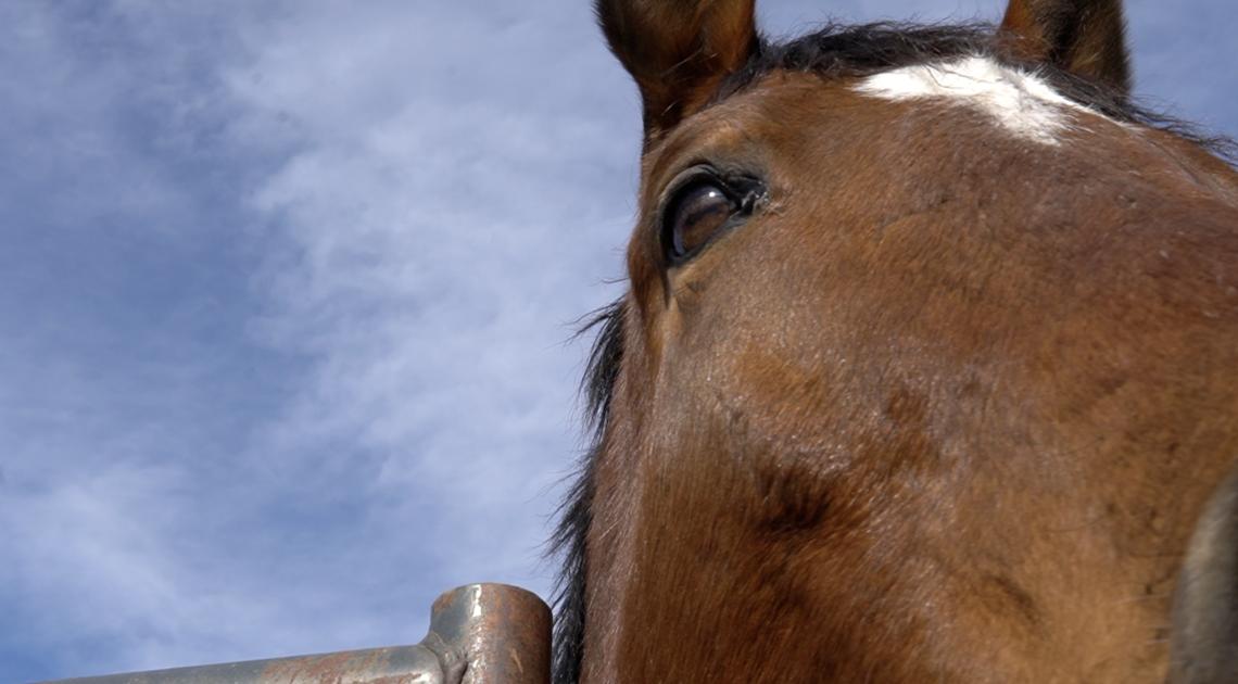 Nous espérons que le don d'huile de CBD aidera les chevaux de Rocky Mountain Horse Rescue à se rétablir