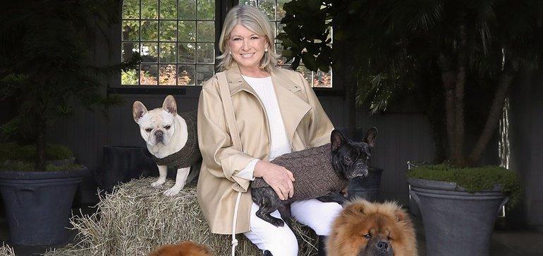 Retail Therapy: Martha Stewart lance une ligne CBD pour chiens