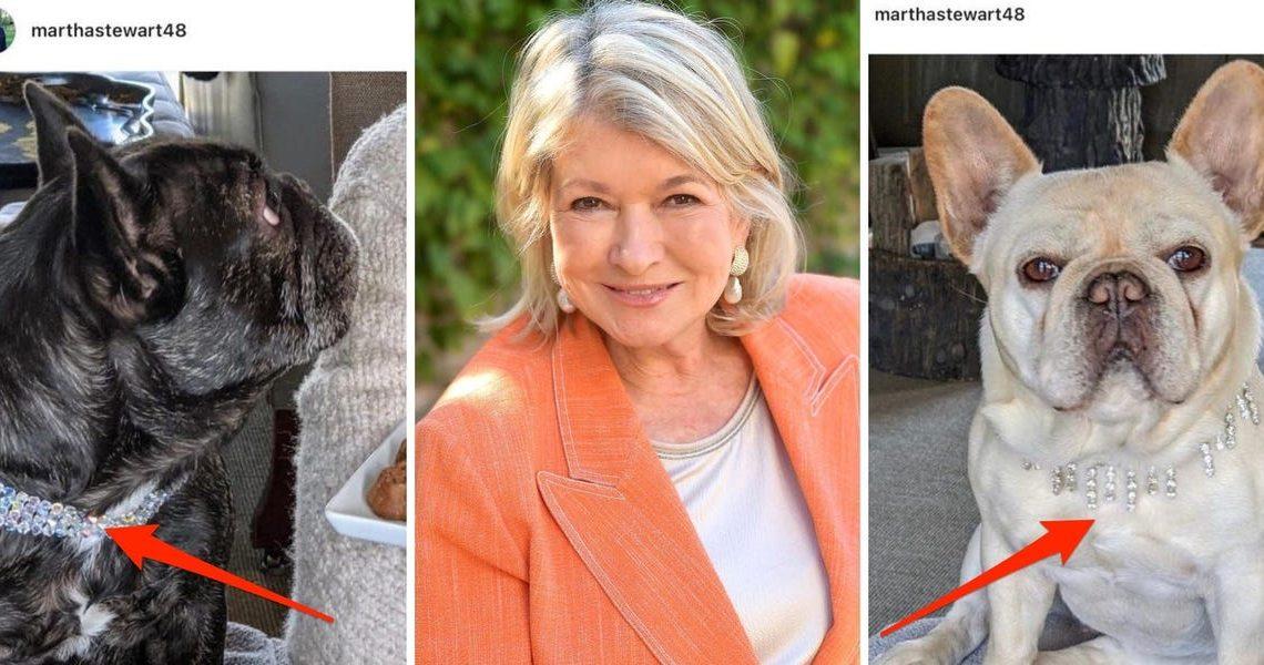 Les chiens de Martha Stewart portent des colliers en diamant faisant la promotion de ses friandises CBD