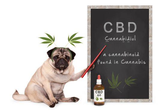 Méthodologie de recherche complète du marché mondial Pet CBD | Canna-Pet, Pet Releaf, Curaleaf, Choom Holdings, Acquisition de stratégies de cannabis, Receptra Naturals, PotNetwork Holdings, Pure Spectrum, Trulieve Cannabis – KSU