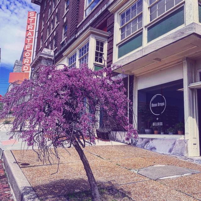 Nouveau magasin de détail à Alton Moon Drops CBD + Wellness
