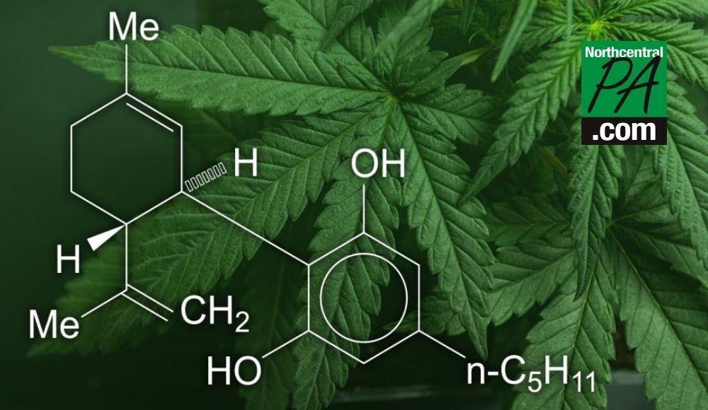 Des entreprises ont mis en garde contre la vente illégale de produits de soulagement de la douleur au CBD en vente libre: FDA |  Santé