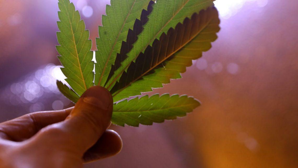Les leaders de l'industrie du cannabis du New Jersey parleront de la culture locale, du chanvre et du CBD à l'événement de réseautage du 13 avril