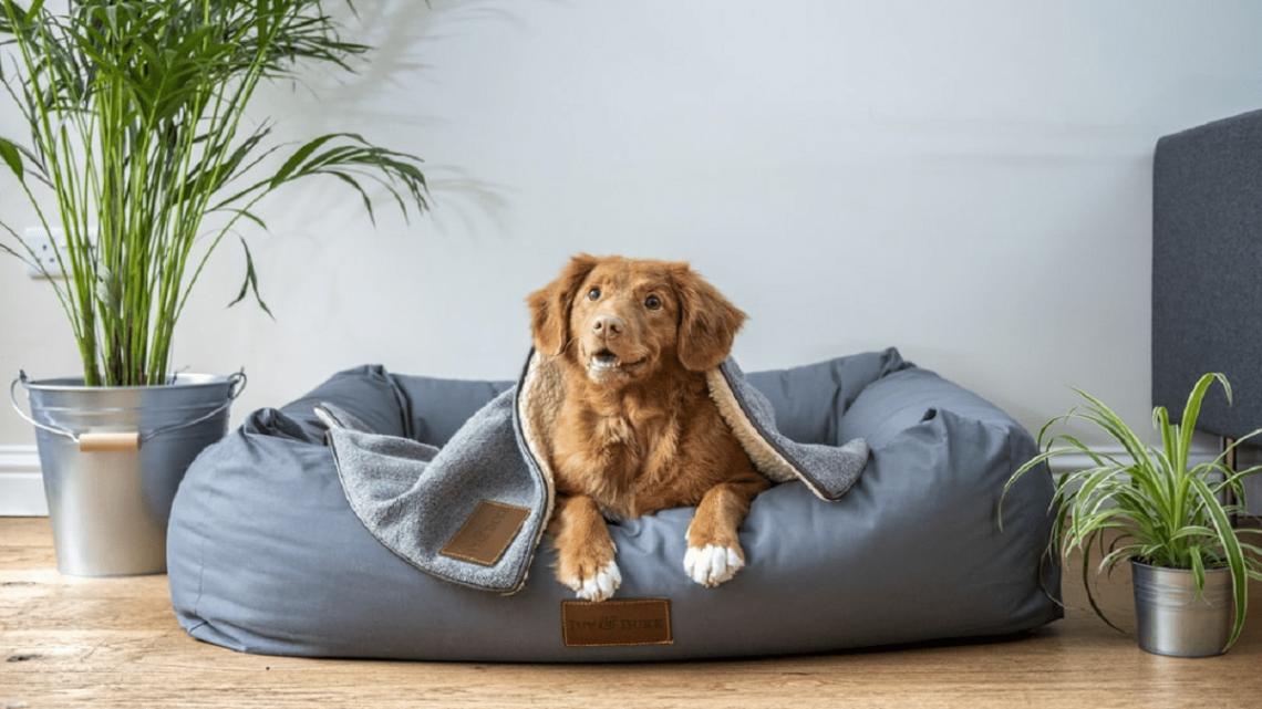 Quand devriez-vous donner à votre animal de compagnie des friandises CBD pour chiens?