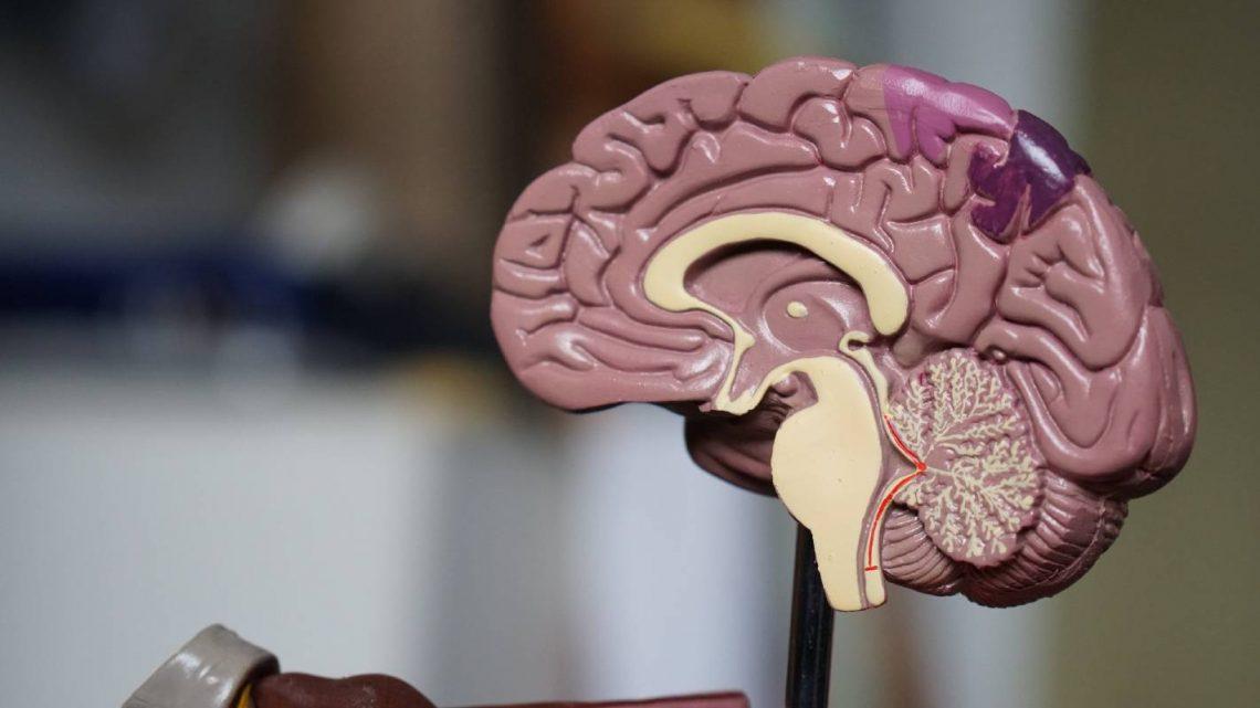 Une étude sur le CBD à haute dose révèle un potentiel étonnant pour traiter la maladie d'Alzheimer