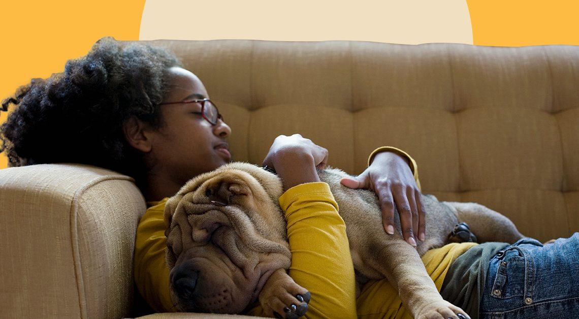 3 meilleurs produits CBD pour chiens de 2021