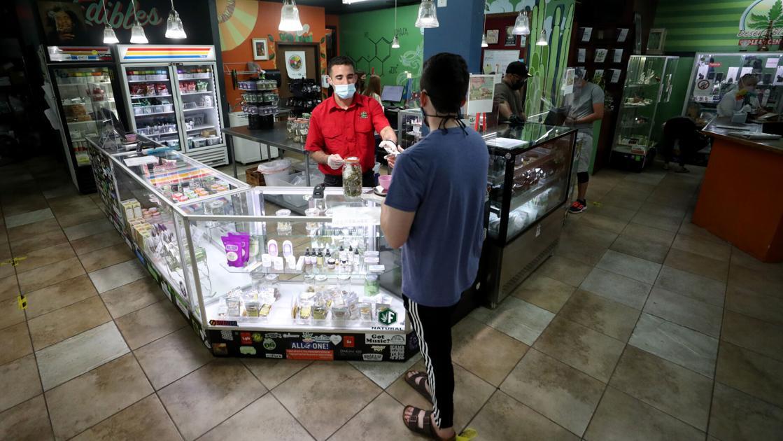 CBD vs THC: Que choisir en fonction de vos besoins |  Nouvelles locales