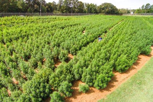 Éducation sur la CDB alors que le gouverneur Tony Evers travaille à la légalisation de la marijuana dans tout l'État    WFRV Local 5