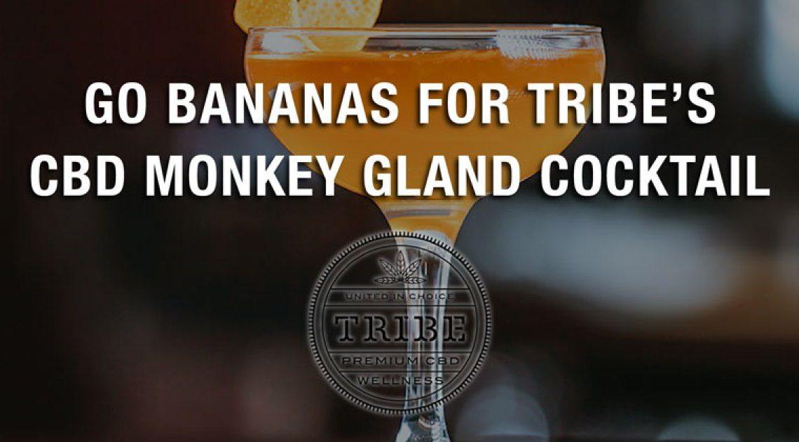 Go Bananas pour le cocktail CBD Monkey Gland de Tribe