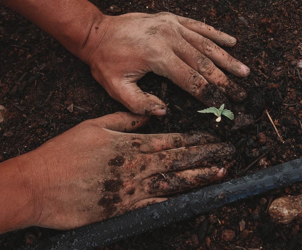 plante verte sur la main des personnes