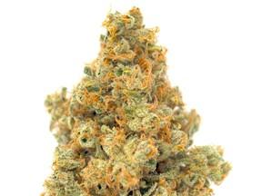 MTL Cannabis a lancé son cultivar Sage N Sour en octobre 2020. Le croisement à dominante sativa entre Sour Diesel et SAGE est riche en THC mais a également un punch de CBG.