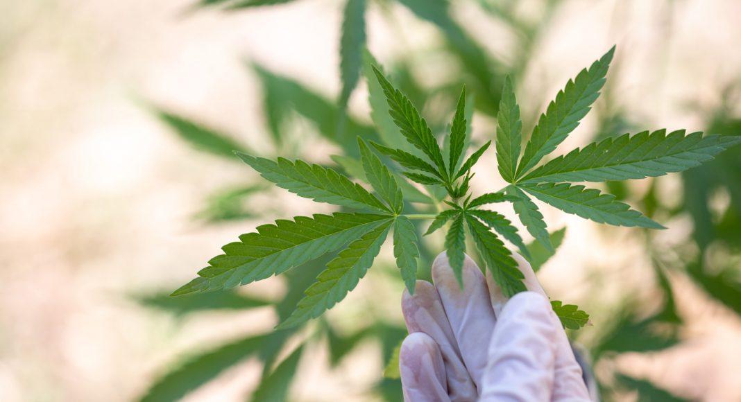 Comment le CBD bloque la paranoïa et l'anxiété du THC de la marijuana