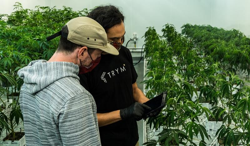 L'automatisation sans contact rationalise la production et la conformité du cannabis