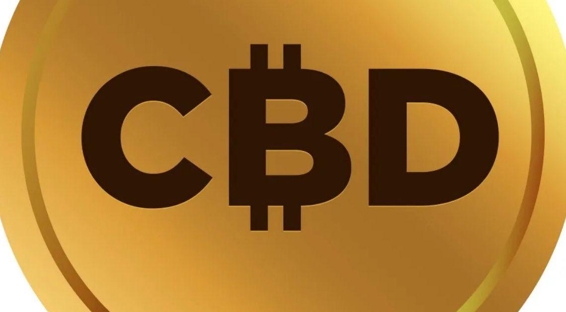 $CBD Coin recherche les meilleurs talents hollywoodiens pour les campagnes à venir après un lancement massif