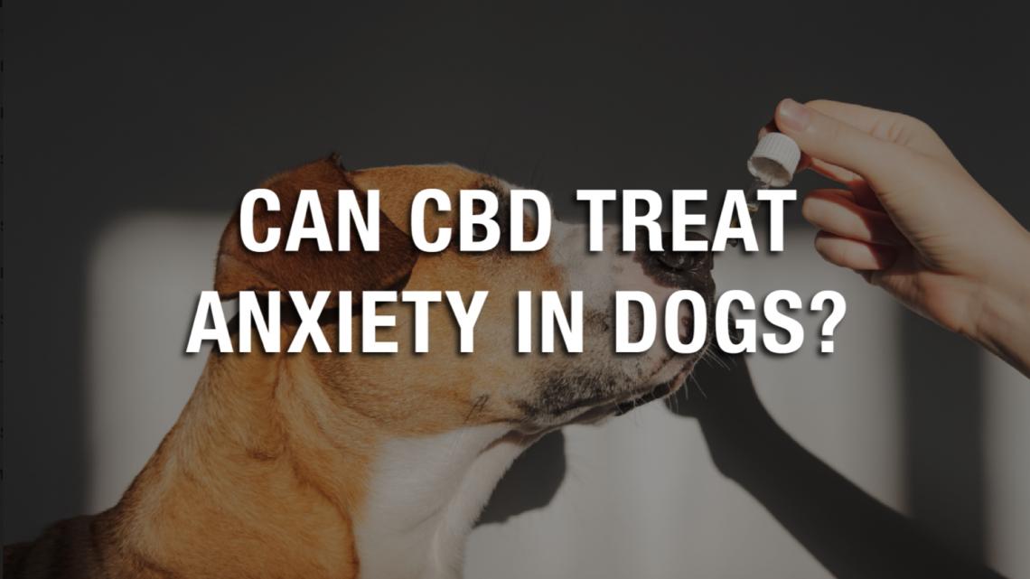 Le CBD peut-il traiter l'anxiété chez les chiens ?