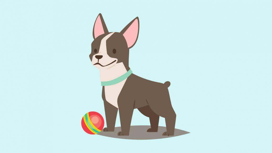 Meilleures friandises pour chiens CBD pour 2021 : avis des meilleures marques et guide d'achat