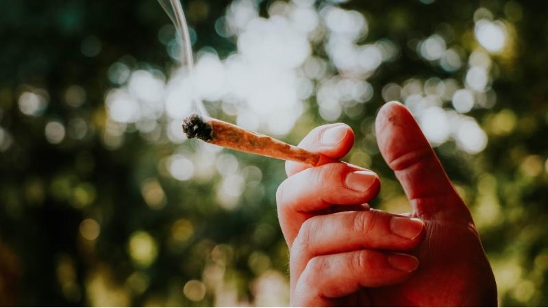 Le vrai coût de la taxe sur la puissance du cannabis