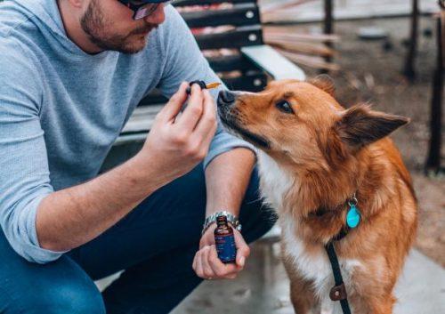 Friandises pour animaux de compagnie au CBD biologique à saveur de citrouille pour le soulagement de l'anxiété et de la douleur