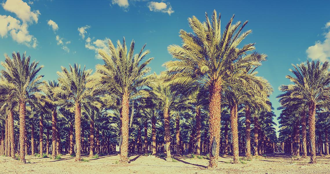 Le Maroc obtient un secteur légal du cannabis