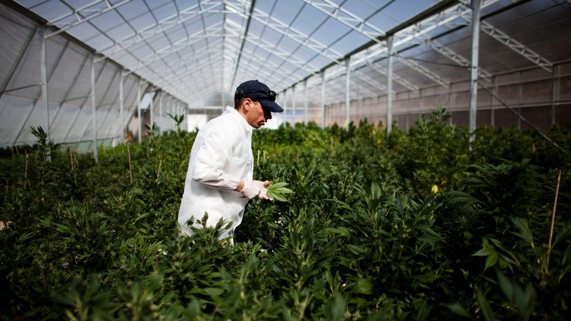 Les cannabinoïdes rares sont la prochaine frontière dans l'industrie de la marijuana