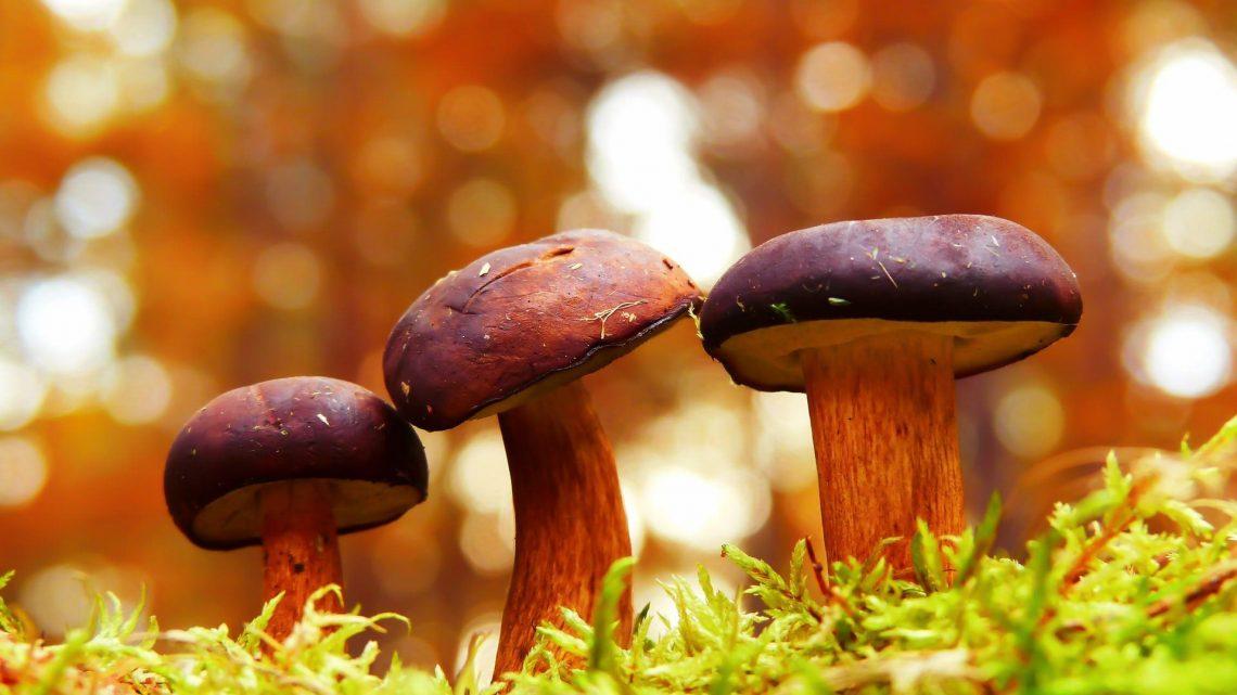 Oubliez le CBD.  Les champignons sont l'ingrédient beauté anti-âge dont vous avez besoin aujourd'hui