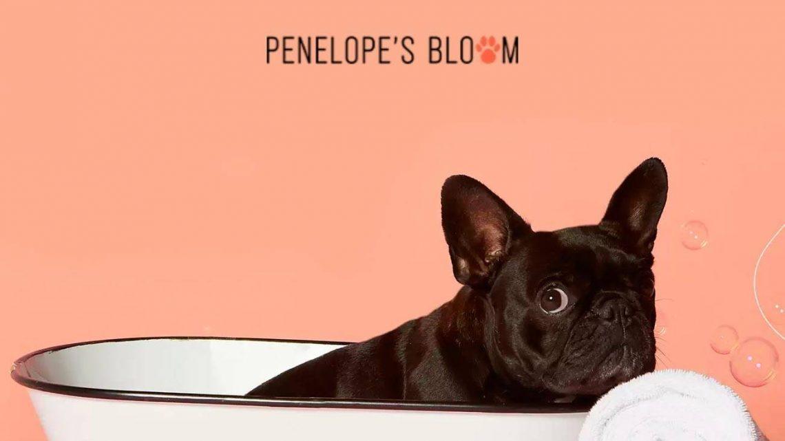 Penelope's Bloom Review – Acheter des produits pour animaux de compagnie CBD de haute qualité ?