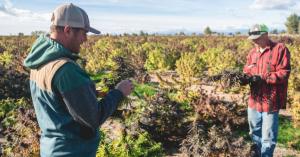 Polaris Innovations est basée dans l'Oregon et a accès aux champs d'aide de la plus haute qualité dans le monde entier.