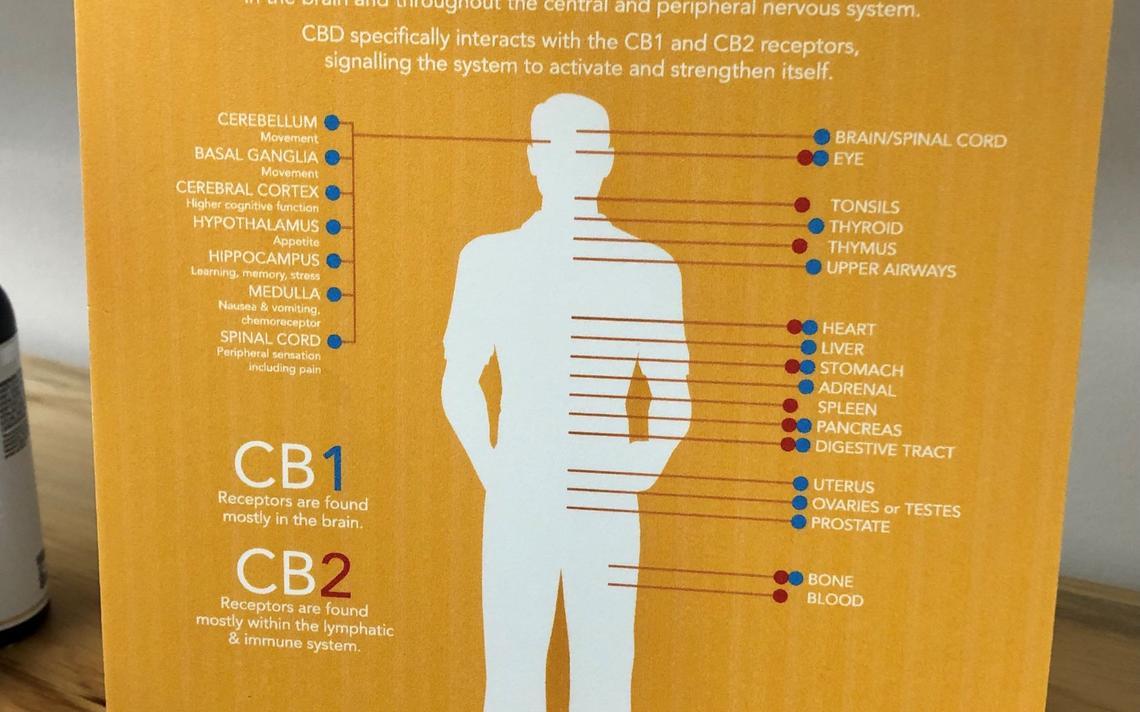 Le magasin Green Therapy est rempli d'affiches et d'aides visuelles qui éduquent les clients sur la façon dont le CBD interagit avec le corps humain.  Par Tammy Swift