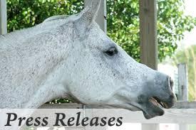 La société CBD fondée par un vétérinaire VETCBD Hemp annonce un programme de bourses d'études pour les étudiants en médecine vétérinaire – The Horse