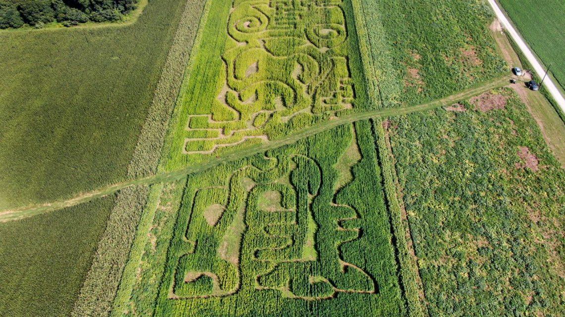 Oubliez le maïs, ce fermier du centre de la Pennsylvanie veut que vous visitiez son labyrinthe de chanvre