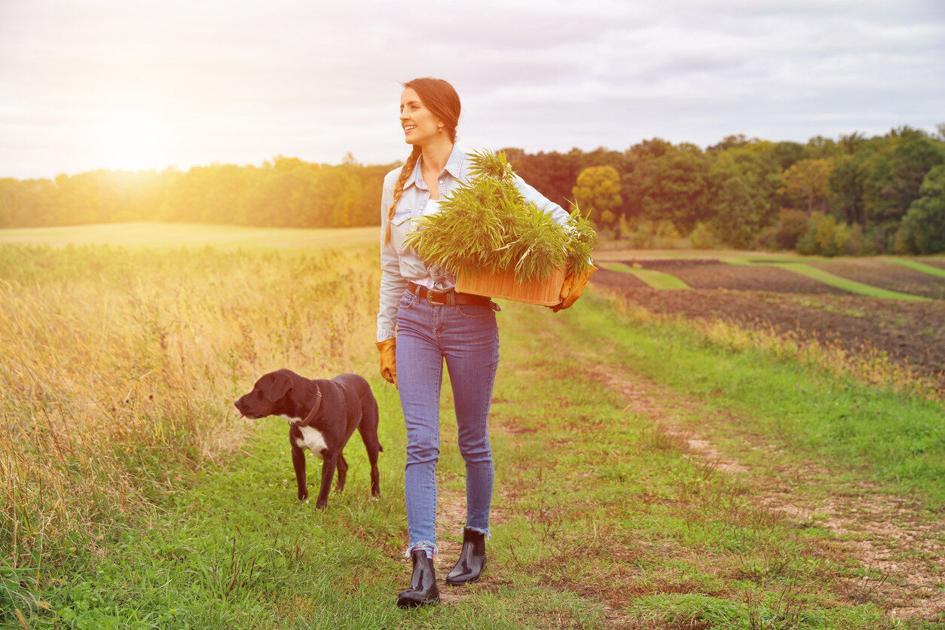 Redbone présente des produits CBD pour les chiens de travail et les athlètes canins |  Nouvelles