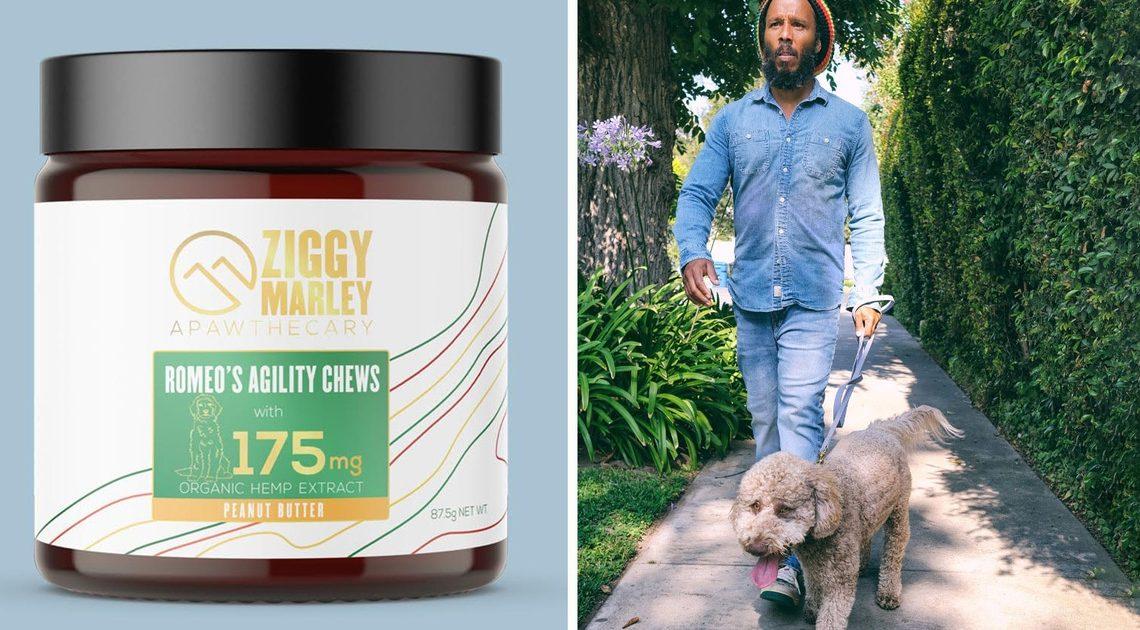 Ziggy Marley vient de lancer « Apawthecary », une gamme de CBD végétalienne pour chiens