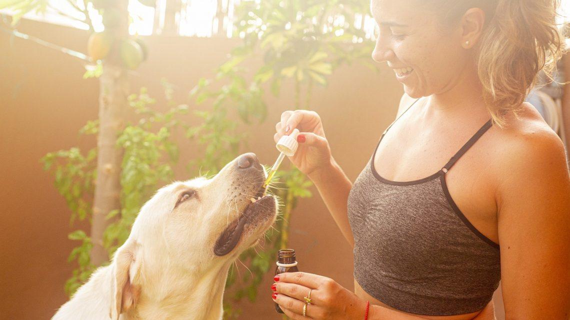 Ce que vous devez savoir avant de donner du CBD à votre chien
