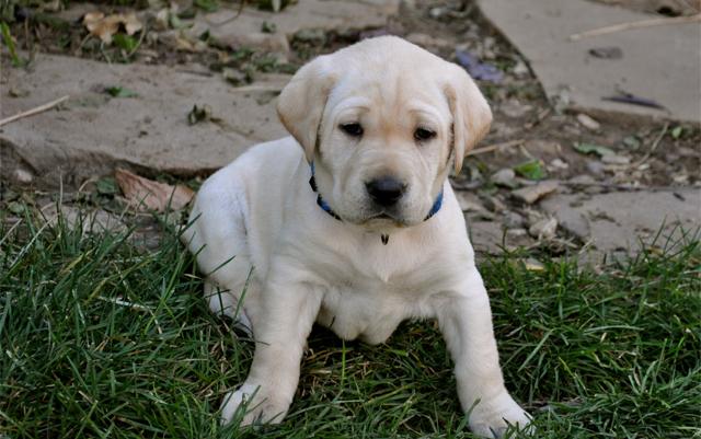 Tout ce que vous devez savoir sur l'utilisation du CBD pour les chiens