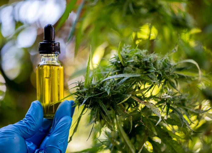 Cosmétiques CBD/cannabis, une entreprise de suppléments obtient une licence colombienne importante